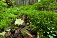 Free Summer Forest Royalty Free Stock Images - 20960099