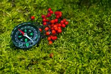 Free Compass On The Green Moss Stock Image - 20960551