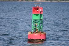 Free Seals Bouy Stock Photography - 20960602