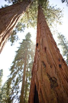 Free Sequoia National Park Stock Photography - 20960652