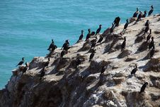 Free Birds On Rock Royalty Free Stock Images - 20961129