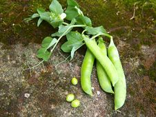 Free Green Peas Stock Photos - 20961363