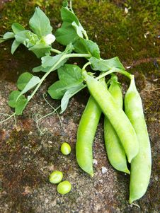 Free Green Peas Stock Images - 20961384