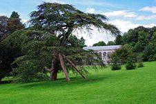 Free Bent Fir In Mariemont Park Stock Image - 20962001