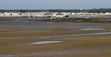 Oyster Field At Low Tide Stock Images