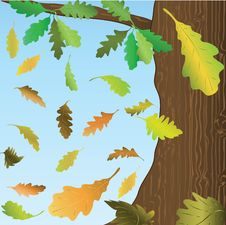 Free Falling Down Oak Leaves. Royalty Free Stock Image - 20963496