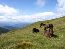 Free Horses In The Mountains Royalty Free Stock Photo - 20964935