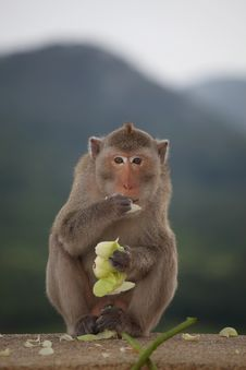 Free Monkey Sitting On The Rock Mountain Royalty Free Stock Photography - 20966467