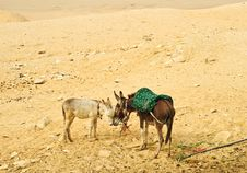 Free Two Donkeys Royalty Free Stock Photography - 20967627