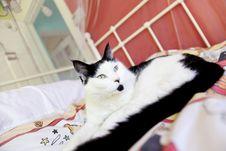 Free Cat Posing Royalty Free Stock Image - 20968446