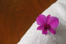 Free Orchid  And White Cotton Stock Photo - 20968770
