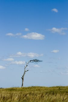 Free Lonely Tree Stock Image - 20969201