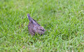 Free Baby Of Dove Birds Stock Photo - 20972530