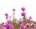 Free Pink Flower Stock Photos - 20973163