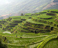 Free Rice Terrace On The Mountain Stock Photography - 20973682