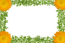 Free Green Plant Frame With Flowers Stock Image - 20972131