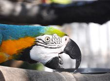 Free Macaw Royalty Free Stock Photography - 20972197
