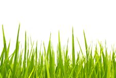 Free Green Grass Isolated On White Stock Photos - 20972433