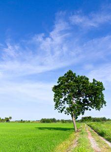 Free Single Tree Standing Alone Stock Photos - 20972603