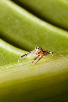 Free Spider Sitting On Leaf Stock Images - 20974194