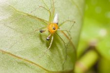 Free Spider Sitting On Leaf Stock Image - 20974231