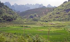 Free Mountain And Rice Fields Of Yangshuo. Stock Images - 20974714