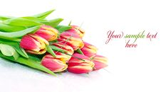 Free Bouquet Of Fresh Tulips Royalty Free Stock Photography - 20976127