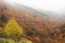 Free Autumn Foggy Landscape Royalty Free Stock Images - 20976609