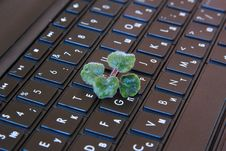 Free Plant On The Keyboard Stock Image - 20977401