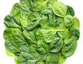 Free Fresh Spinach Royalty Free Stock Photo - 20980145