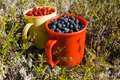 Free Cup Of Blueberry And Cup Of Cowberry Royalty Free Stock Photos - 20980998