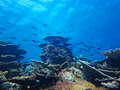 Free Silver Fish On The Coral Reef Stock Photos - 20982773