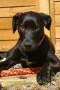 Free Sad Puppy Royalty Free Stock Photos - 20987638