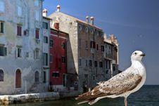 Free Rovinj Croatia And Seagull Royalty Free Stock Photography - 20980607