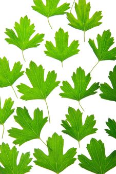 Free Green Foliage Stock Images - 20980704
