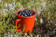 Free Cup Of Blueberry Stock Photo - 20980990