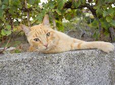 Free Pussy Cat Stock Image - 20984681