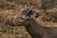 Free Deer Stock Photos - 20985473