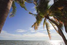 Free Coconut Tree Beside  Beach Stock Photo - 20986850