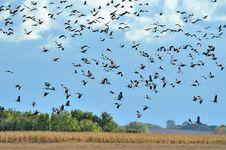 Free Crane Stock Images - 20988114