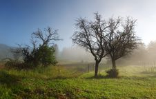 Free Mist In Field With Tree Stock Photo - 20988480
