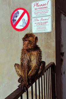 Free No Feeding Stock Photos - 20988943
