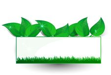 Free Background Green Banner Petal Royalty Free Stock Photography - 20989417