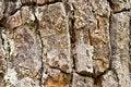 Free Tree Bark Texture Stock Photos - 20993143