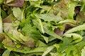 Free Salad Mix Royalty Free Stock Photo - 20994545