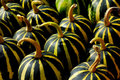 Free Gourds Stock Photography - 20996412