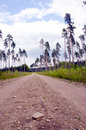 Free Gravel Road And Pines. Royalty Free Stock Images - 20998669