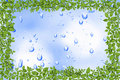 Free Water Drops And Plant Frame Royalty Free Stock Photo - 20998705
