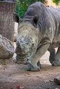 Free Rhino Stock Photography - 20999242