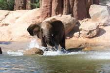 Free African Elephants Royalty Free Stock Images - 20990089